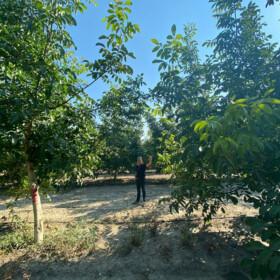 Obilazak plantaže oraha u Turskoj