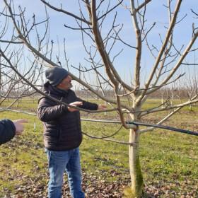 Obuka orezivanja oraha - Italija 2019
