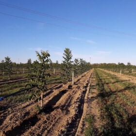 Obuka za sadnju oraha - Italija